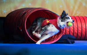 stunt dog experience poway onstage discount code